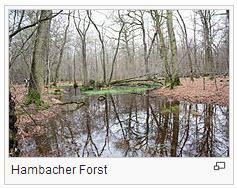 Bild Hambacher Forst